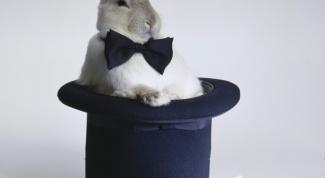 Как сделать клетку для кроля