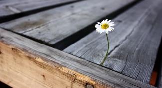 Как скрасить одиночество