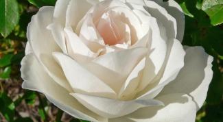 Как сделать розу из кожи