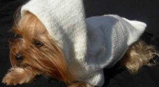 сделать одежду для собак