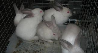 разводить кроликов в домашних условиях