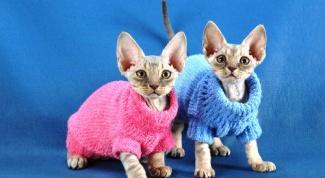 Как сделать костюм для кошки своими руками