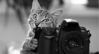 Как провести дома фотосессию