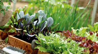 Как удобрять растения