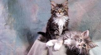 Как приучить котёнка к его месту