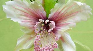 Как сделать орхидеи из ткани