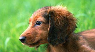 Как приучить собаку ходить на улице