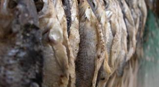 Как завялить рыбу