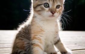 Как кормить котенка в 3 месяца