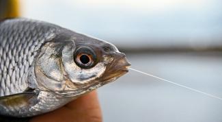 Как сделать резинку для рыбалки в 2018 году
