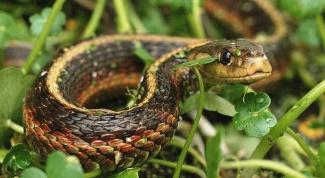 Как ловить змей