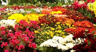 Как украсить клумбу цветами