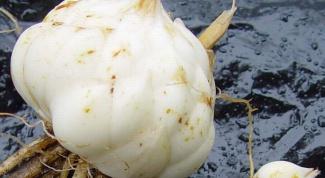 Как сажать луковицу лилии