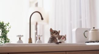 Как приучить кота к воде