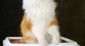 Как приучить уже взрослого кота к туалету
