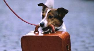 Как провезти собаку в поезде