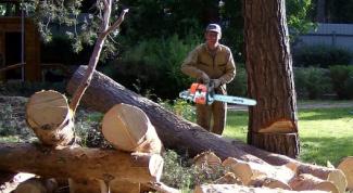 Как свалить дерево
