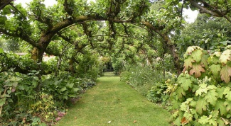 Как спланировать сад в 2017 году