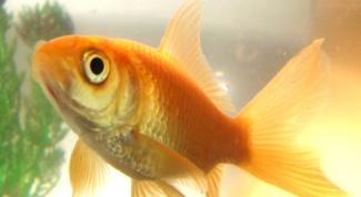 Как посчитать объем аквариума