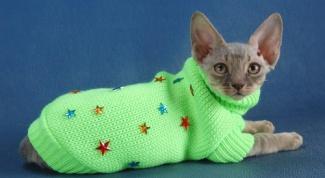 Как связать кошке одежду
