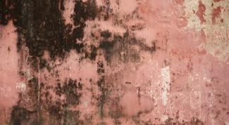 Как удалить грибок на стене