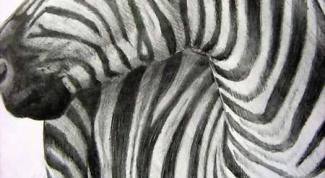 Как рисовать зебру