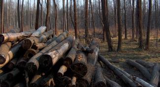 Как рубить лес