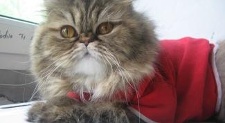 Как сшить кошке одежду
