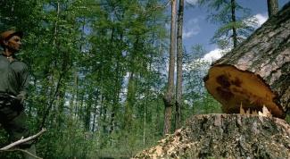 Как рубить дерево