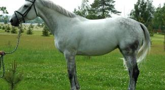Как продать лошадь