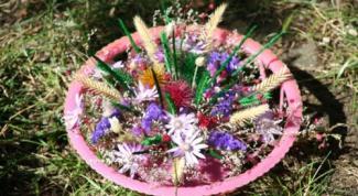 Как узнать название цветов