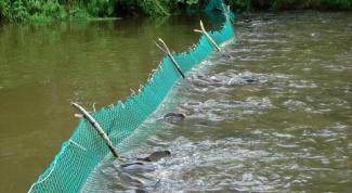 Как ставить сети на реке