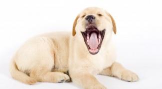 Как узнать возраст у собак
