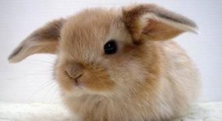 Как продать кролика