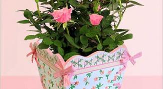 Как размножать комнатные розы