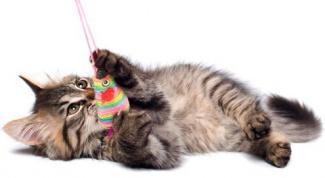 сделать игрушки для котенка