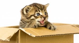 сделать дом для кота