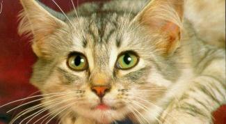 Как определить породу кота