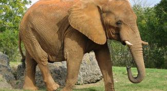 Как назвать слона