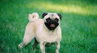 Как назвать маленькую собачку