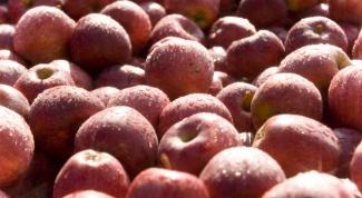 Как приготовить яблочный уксус в домашних условиях