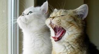 Как научить разговаривать кошку