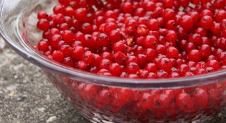 How to prepare red currants