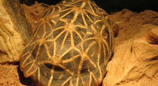 Как сшить черепаху