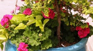 Как определить комнатное растение