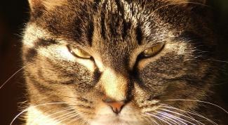 How to crack cat shots