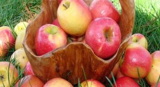 Как собирать яблоки в 2018 году