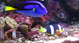 Как менять воду у рыбок