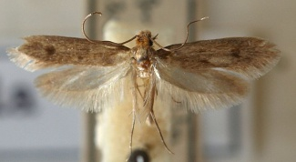 How to keep a fur coat from moth