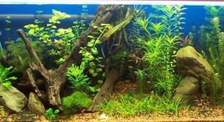 Как отстаивать воду для аквариума
